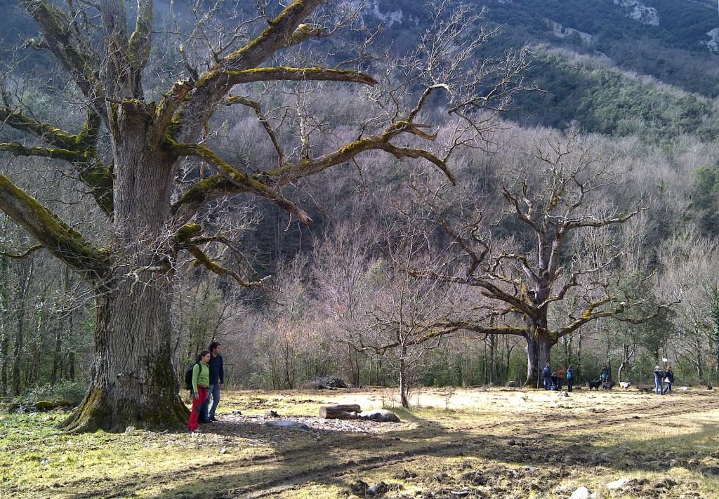 Els Tres Roures del Rei - En Ruta Girona