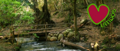 La Gomera: Heartbeats