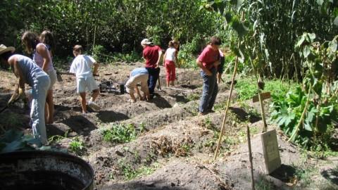 Organic garden to enjoy with the family