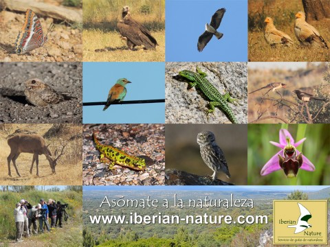 Iberian Nature – Nature Guides Services.