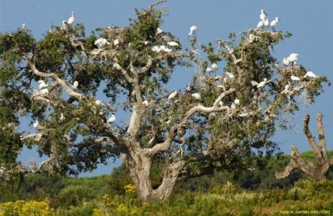 Doñana Nature Area