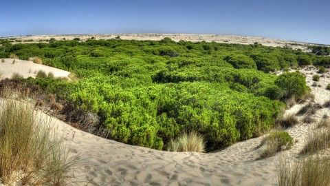 Doñana, an ideal site to enjoy ecotourism