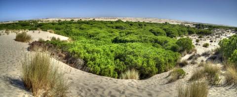 Doñana, an ideal site to enjoy ecotourism