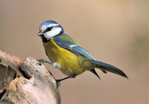 Get started in Ornithology in Huesca