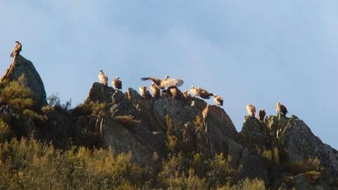 Vultures Land