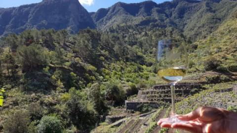 Montoro winery