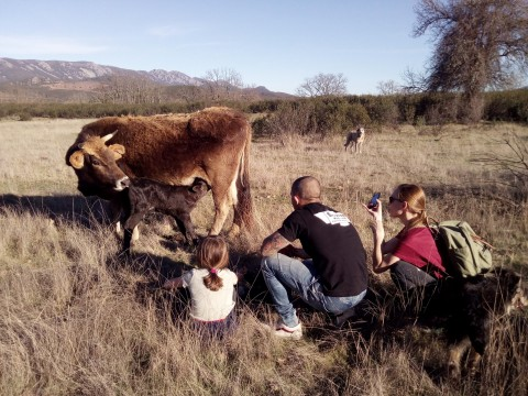 Workshops on goat dairy products and gastronomy