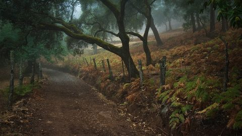Old trees and ancestral traditions in the Natural Park Sierra de Aracena y Picos de Aroche